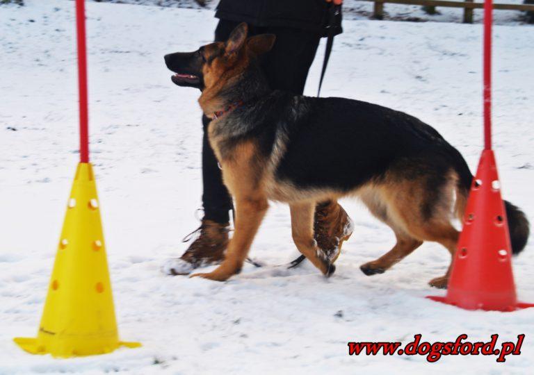 Psia podstawówka