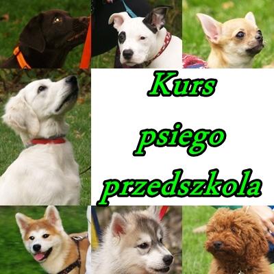Jesienne psie przedszkole