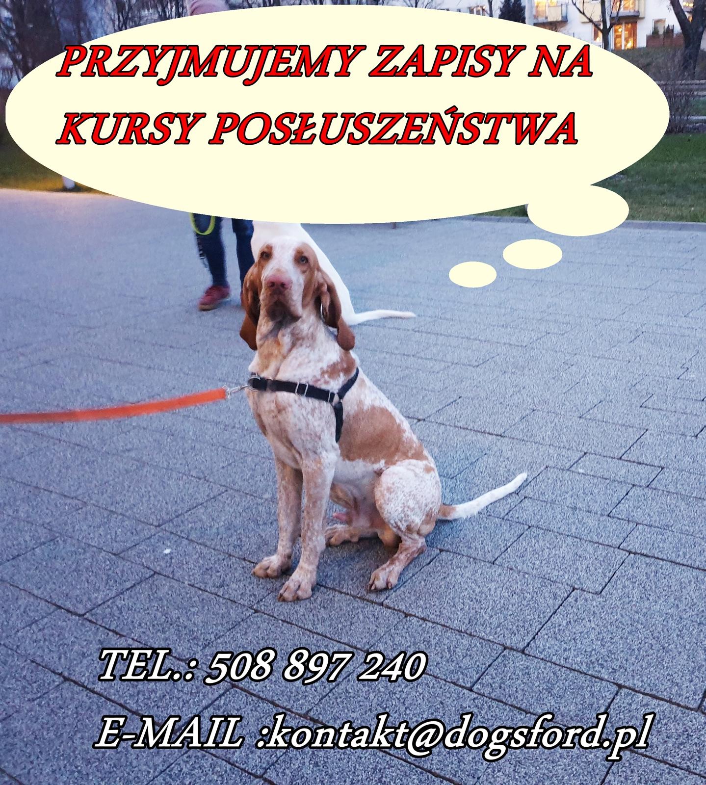 Psia podstawówka 15.05.2019r.